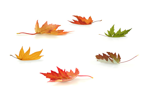 かえでの葉「秋の落ち葉」:スマホ壁紙(3)