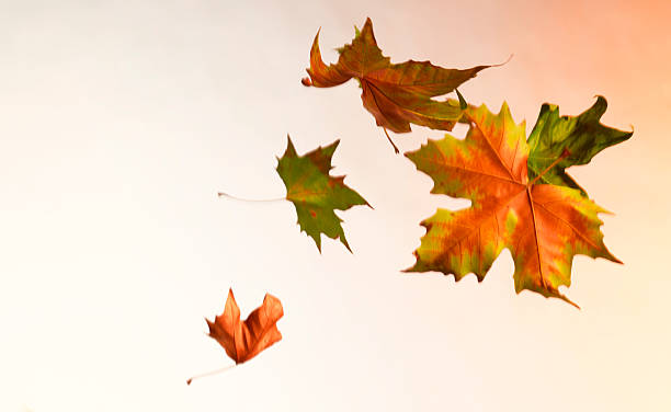 Autumn leaves blowing in the wind:スマホ壁紙(壁紙.com)