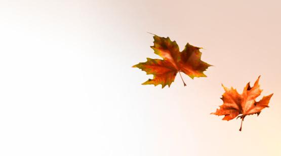 かえでの葉「Autumn leaves blowing in the wind with copy space」:スマホ壁紙(8)