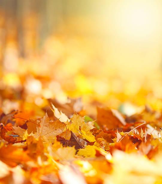 秋の葉のバックグラウンド:スマホ壁紙(壁紙.com)