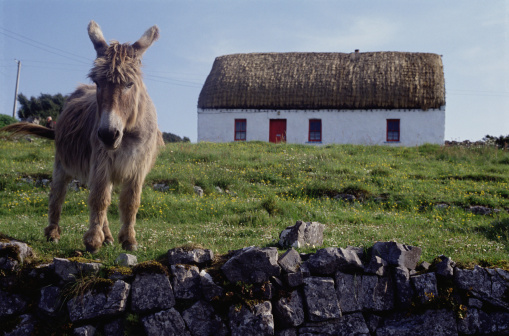 Bungalow「Donkey and Farmhouse in Aran Islands」:スマホ壁紙(16)