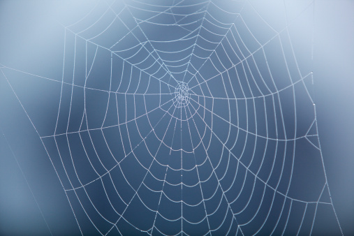Intricacy「Spider Web covered in morning dew.」:スマホ壁紙(7)