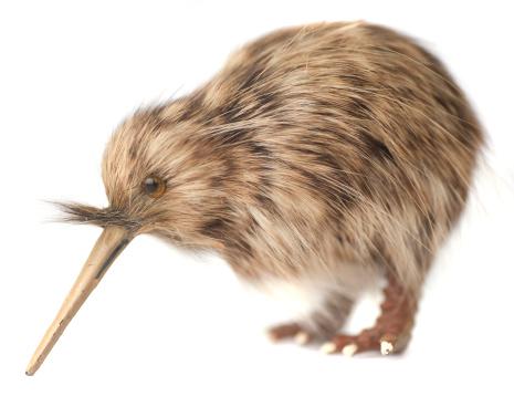 背景「kiwi bird」:スマホ壁紙(12)