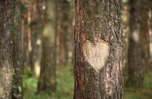 Tree Trunk「Pine Heart」:スマホ壁紙(13)