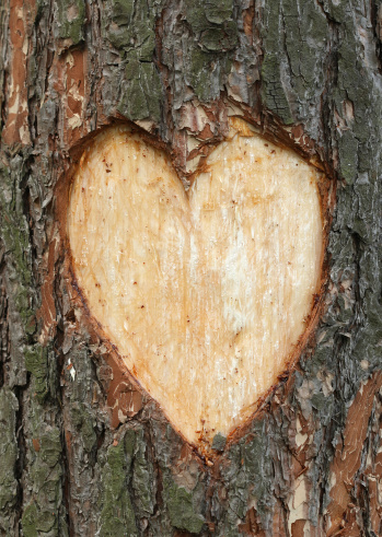 Plant Bark「Pine heart」:スマホ壁紙(19)