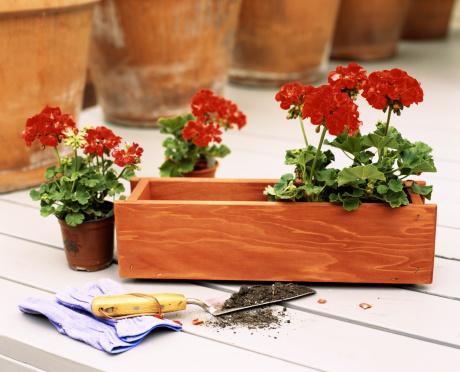 Planting「Flowers in flower box」:スマホ壁紙(4)