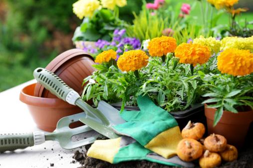 Planting「flowers in the garden」:スマホ壁紙(4)