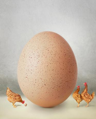 Females「Chicken and giant egg」:スマホ壁紙(16)