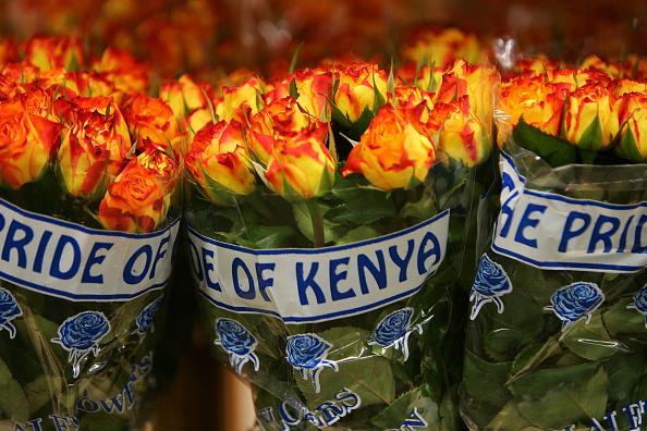 Kenya「Worlds Largest Flower Auction Prepares For Valentines Day」:写真・画像(4)[壁紙.com]