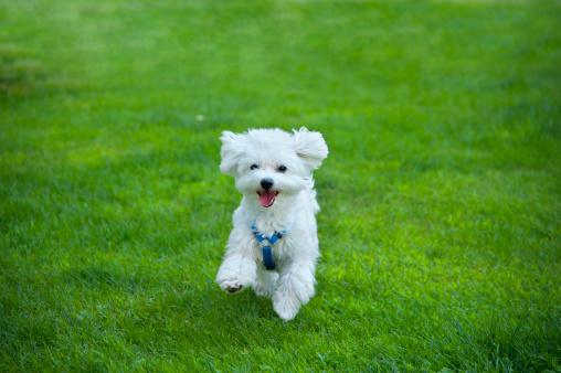 Puppy「Happy」:スマホ壁紙(6)