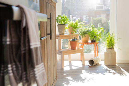 Seasoning「Herbs in flowerpots at the kitchen window」:スマホ壁紙(19)
