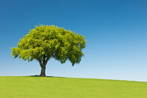 Single Tree「Lone tree on hill, Summer」:スマホ壁紙(13)