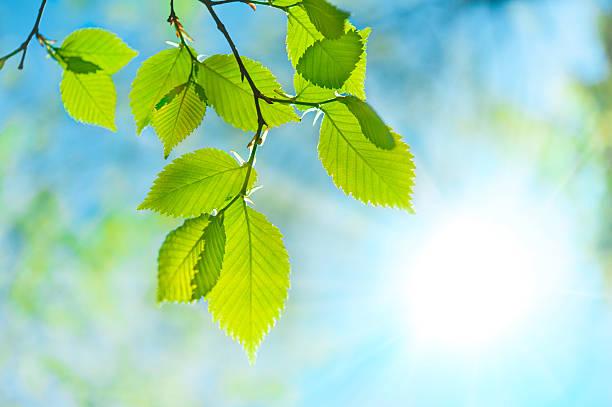 Green leaf opposite sun and sky:スマホ壁紙(壁紙.com)