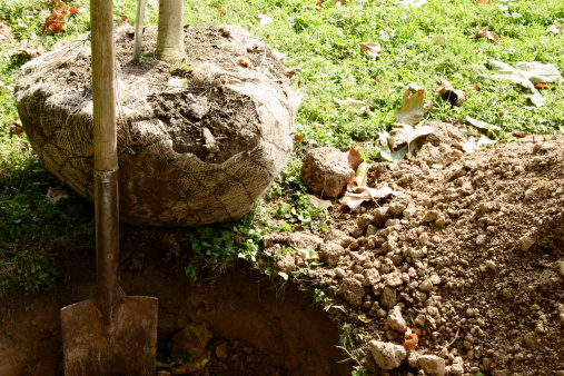 Digging「Shovel in freshly dug hole with tree nearby to be planted」:スマホ壁紙(7)