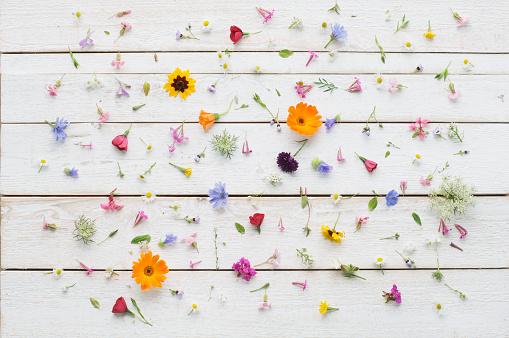 Wildflower「Blossoms of summer flowers on white wood」:スマホ壁紙(0)