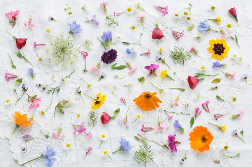 Uncultivated「Blossoms of summer flowers on white tablecloth」:スマホ壁紙(12)