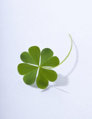 Luck「4 leaf clover」:スマホ壁紙(14)