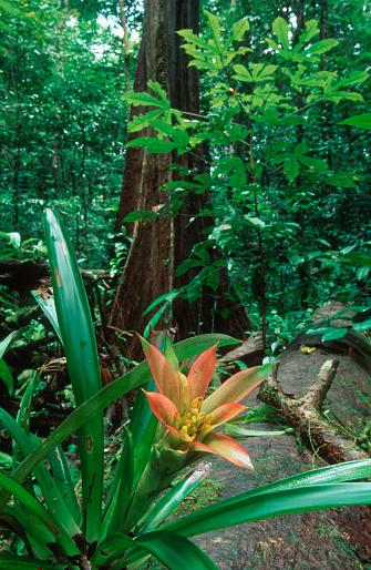 Amazon Rainforest「Amazon Rainforest」:スマホ壁紙(1)