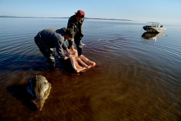 Shallow「Fishing For Sturgeon」:写真・画像(12)[壁紙.com]