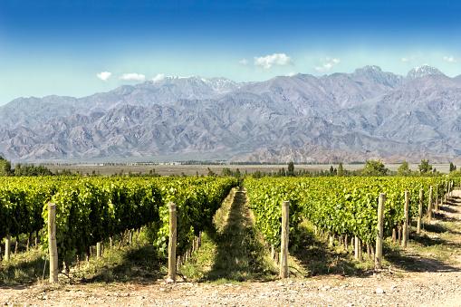 Argentina「Beautiful springtime at vineyards」:スマホ壁紙(8)