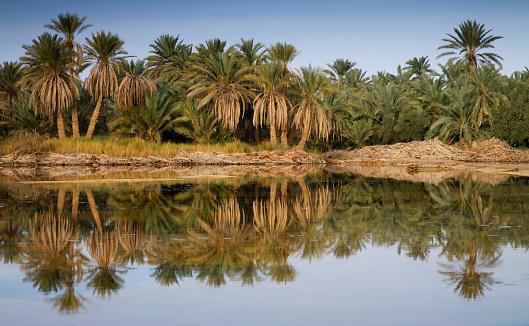 El Siwa「Water And Palm Trees In The Siwa Oasis; Siwa Egypt」:スマホ壁紙(6)