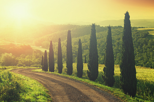 Italian Cypress「Dirt road with cypress trees in Tuscany, Italy」:スマホ壁紙(16)