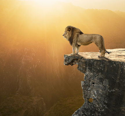 Animal Mane「Lion Surveying Kingdom」:スマホ壁紙(17)