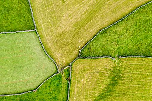 田畑「Green Pastures」:スマホ壁紙(7)