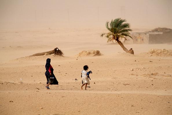 Tree「Golden Water In The Desert」:写真・画像(8)[壁紙.com]