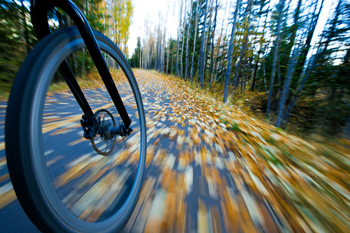 Aspen Tree「The view of the front wheel of a cyclo-cross commuter bike and the aspen leaves on a bicycle pathway in fall.」:スマホ壁紙(12)