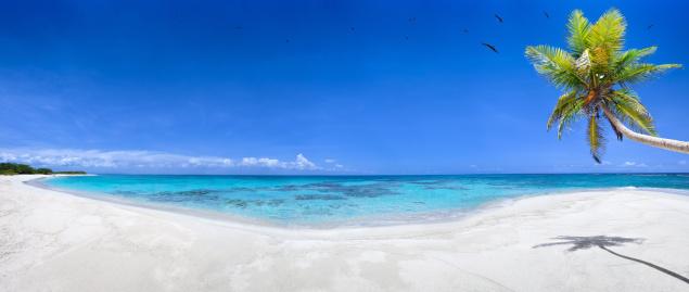 Caribbean「Tropical white sand virgin beach」:スマホ壁紙(13)
