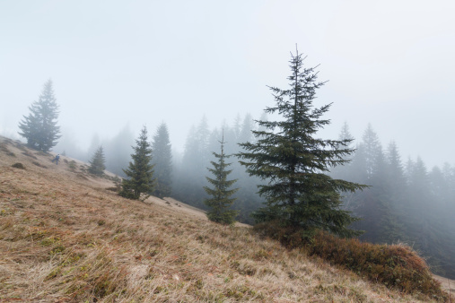 Fairy「Fairytale Forest - Sunbeams in Spruce Woodland」:スマホ壁紙(12)