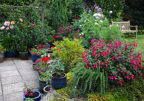 Gardening「Bright flowers in English garden with patio pots & flowerbeds.」:スマホ壁紙(3)