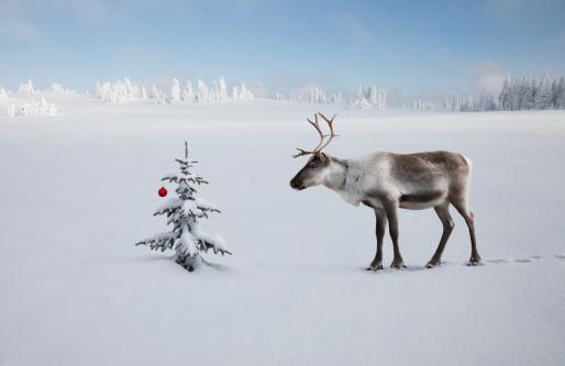 reindeer「A reindeer looking at christmas tree and ornament」:スマホ壁紙(11)