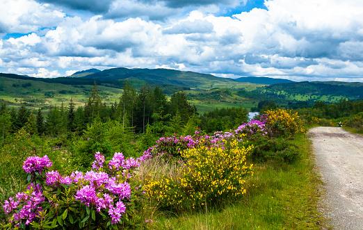 Wildflower「Lake and mountain landscape, Rob Roy Way, Scotland, United Kingdom」:スマホ壁紙(0)