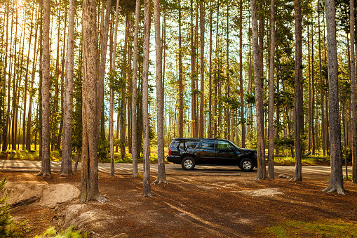 4x4「SUV parked on road in forest, Yellowstone National Park, Idaho, USA」:スマホ壁紙(11)
