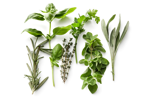 Tasting「Fresh Herbs: Rosemary, Basil, Thyme, Parsley, Oregano and Sage Isolated on White Background」:スマホ壁紙(14)