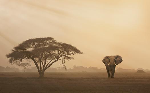 Walking「Elephant at sunset」:スマホ壁紙(1)