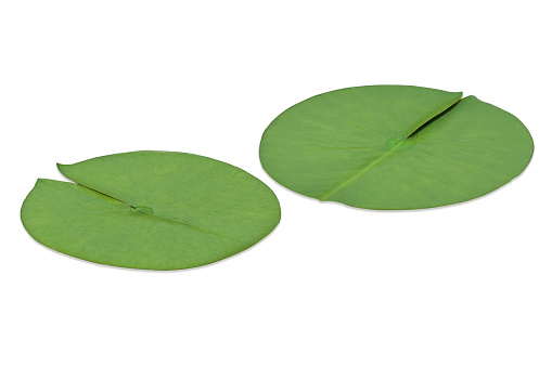 Planting「Lotus leaf」:スマホ壁紙(5)