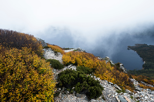 クレイドル山「Deciduous Beech or Fagus in colour at Cradle Mountain, Tasmania.」:スマホ壁紙(5)