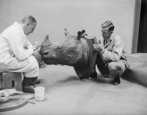 Stuffed「Stuffed Rhino」:写真・画像(8)[壁紙.com]
