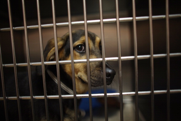 Emergency Shelter「Animal Rescue Group Takes In Cats And Dogs Displaced From Oklahoma Tornadoes」:写真・画像(14)[壁紙.com]