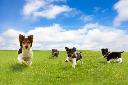 Four Animals「Puppies Running Through Green Field Against Blue Sky」:スマホ壁紙(3)