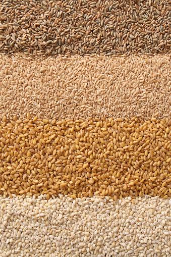 Seed「Cereals」:スマホ壁紙(1)