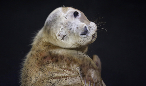 Animal Eye「RSPCA Centre Rescues Seal Pups From Recent Storms」:写真・画像(3)[壁紙.com]