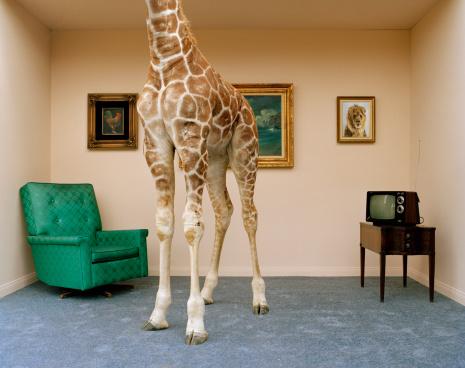 Bizarre「Giraffe in living room, low section」:スマホ壁紙(12)