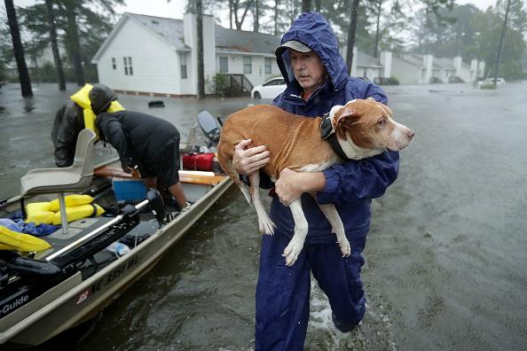 Pets「Hurricane Florence Slams Into Coast Of Carolinas」:写真・画像(10)[壁紙.com]