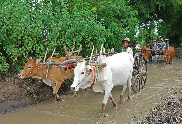 Shallow「Travelling By Ox-Cart」:写真・画像(6)[壁紙.com]