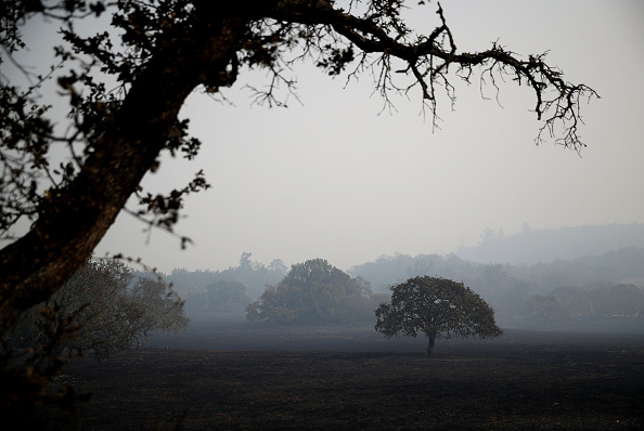 Tree「Multiple Wildfires Destroy Homes, Threaten California Wine Country」:写真・画像(11)[壁紙.com]
