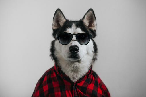 Happiness「Cool dog」:スマホ壁紙(10)